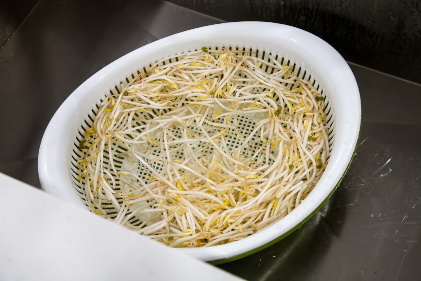 Mung Bean Sprouts - Preparation